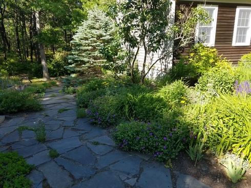 GardenJune2020-2.jpg