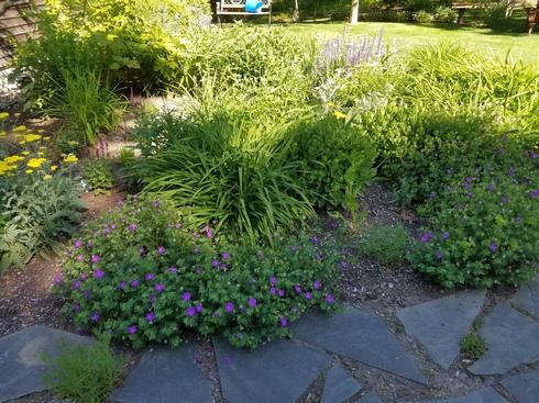 GardenJune2020-4.jpg